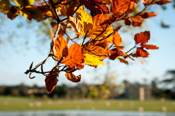 autumn leaves Croome Court