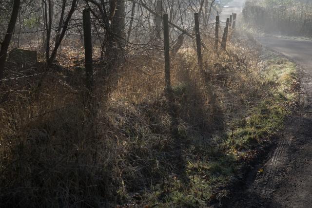 Chaddesley Wood-2089 - Copy