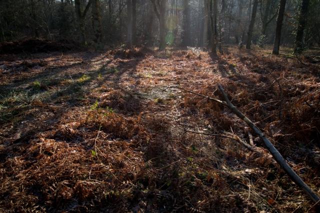 Chaddesley Wood-2106