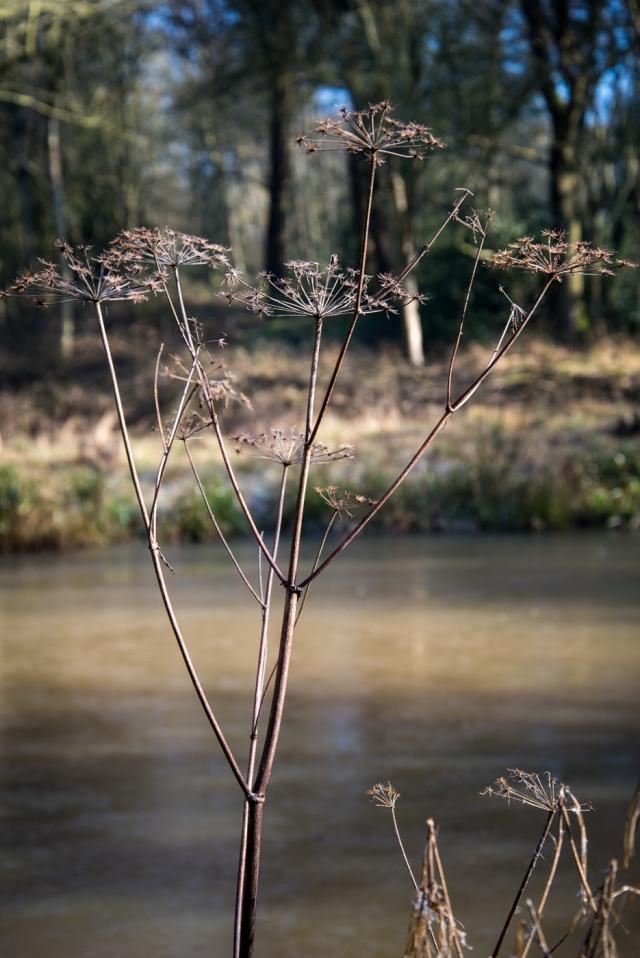 Chaddesley Wood-2120