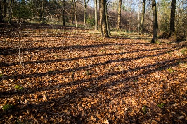 Chaddesley Wood-2155