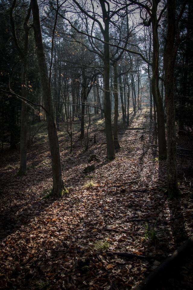Chaddesley Wood-2158