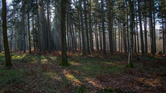 Chaddesley Wood-2168
