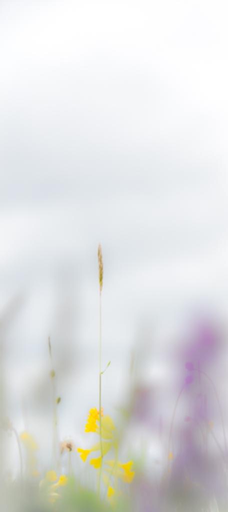 Eades Meadow WWT-6532 small edited
