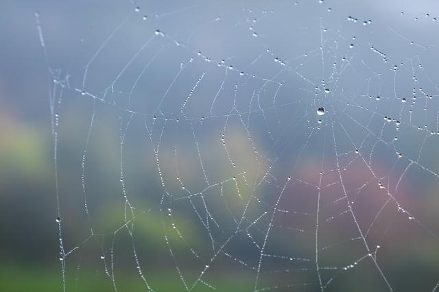 Knightwick autumn colours & web
