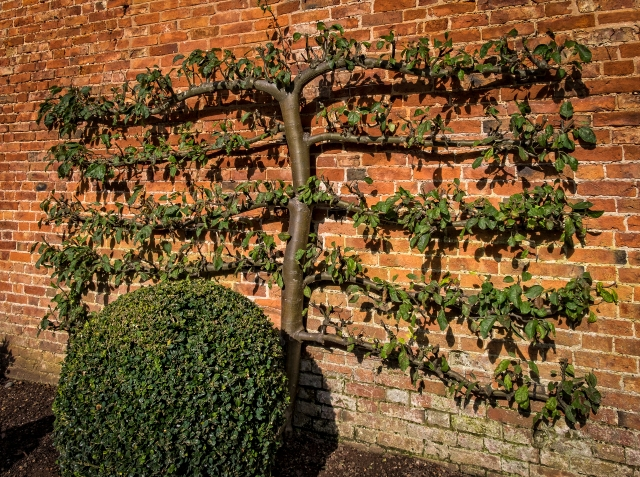 hanbury-hall-apple-day-6015