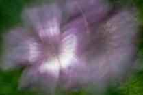 Garden ICM 4229
