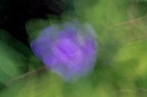 Garden ICM 4233
