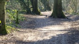 Magpie walk